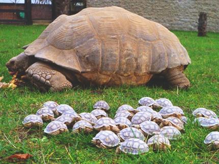 300 Tortoises